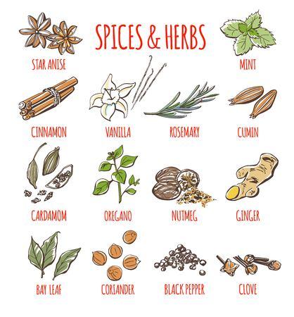 Duży zestaw wektor zbiory ilustracje najpopularniejszych przypraw i ziół. Kolekcja kolorów ręcznie rysowane nasiona, rośliny i rośliny na białym tle.