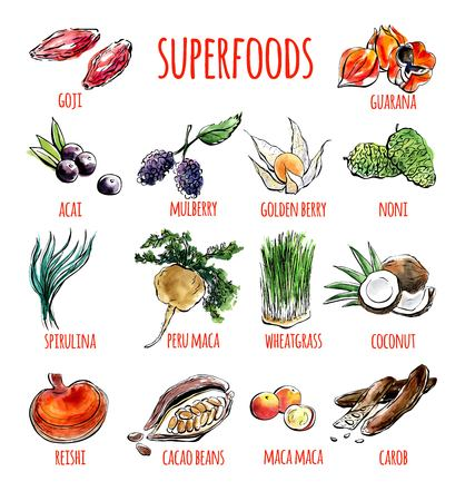 Big set of vector doodle illustrations of the most popular super foods. Collection of hand drawn fruits, plants and berries with black outline and watercolor stains isolated on white background.