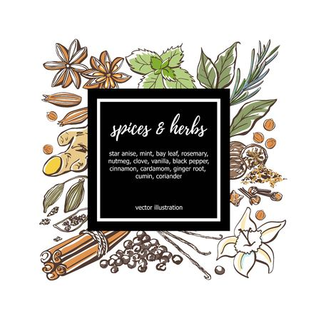 Colored vector illustration Spices and herbs. Hand drawn sketchy doodle objects in a square composition with a black label and place for your text. Card, poster, badge, label or banner design.