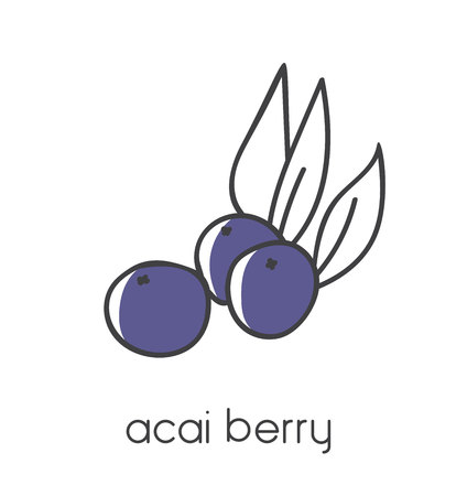 Modern vector illustration of a superfood Acai berry. Clear and simple line icon design with black outline and violet color blocks isolated on white background.
