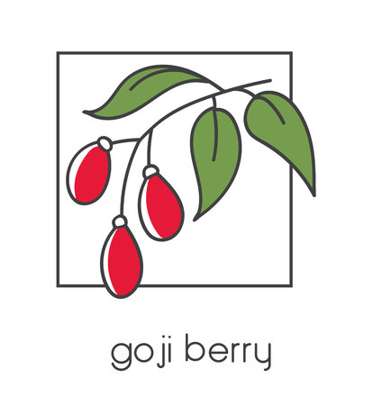 Modern vector illustration of a superfood Goji berry. Clear and simple line icon set with black outline and red color blocks isolated on white background with line square frame. Illustration