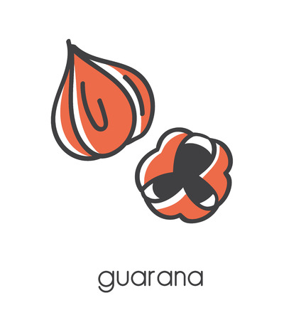Modern vector illustration of a superfood Guarana. Clear and simple line icon design with black outline and orange color blocks isolated on white background.