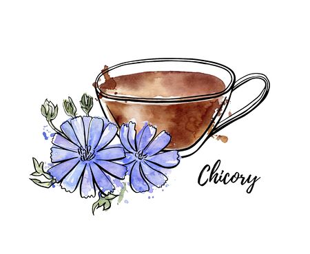 Vector hand drawn illustration of herbal drink Chicory. Black ink outline and bright isolated watercolor texture on white background. Healthy beverage in the glass cup and flowers.