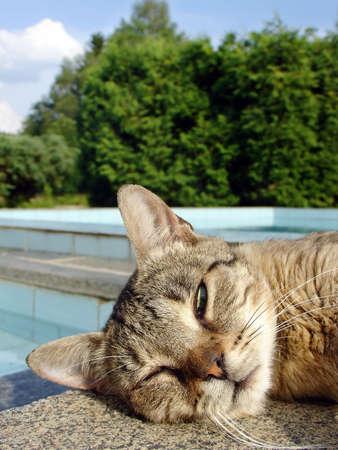 Sleeping cat on the swimming pool edge