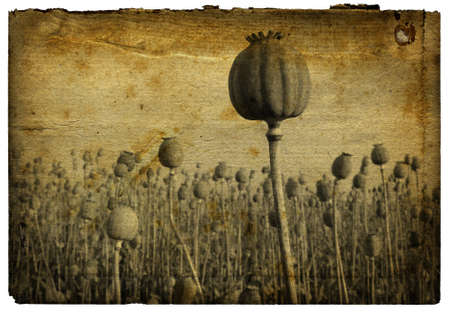 Retro Background - Poppy Field with grainy rough surface