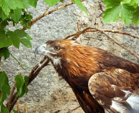 disturbing: A disturbing sight of an eagle