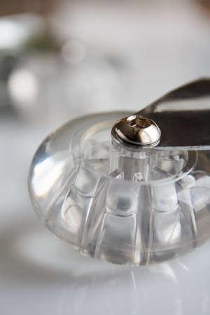 castor: lying transparent castor  closeup