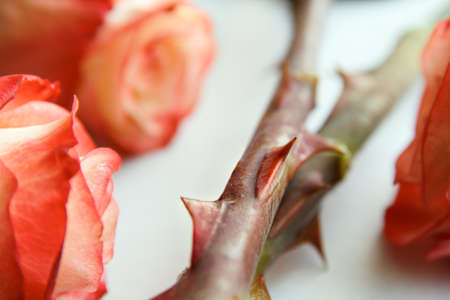 thorns and roses: sharp thorns roses