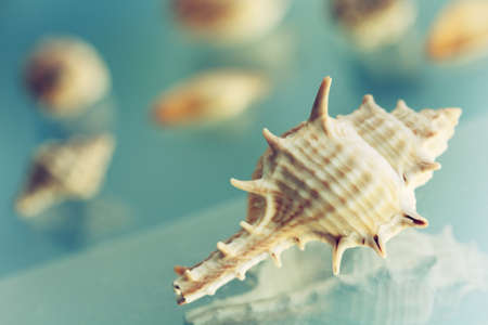 murex shell: sea shell with spikes, retro style