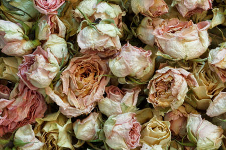 dry withered roses retro style, background