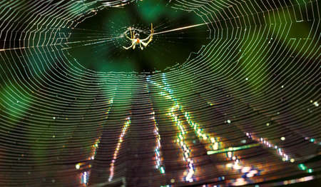spider on a web in the forest, in backlight