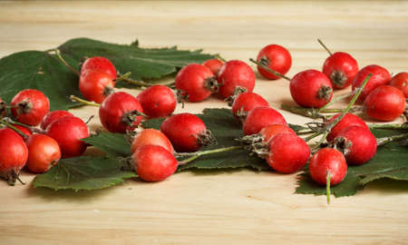 hawthorn berries and leaves scattered on the wooden table