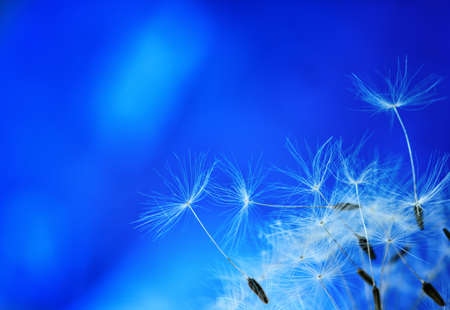parachutes, dandelion seeds on a  abstract blue background