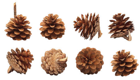 set of pine cones isolated on a white background