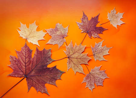 composition of dry autumn leaves on a bright orange background, top view, flat lay