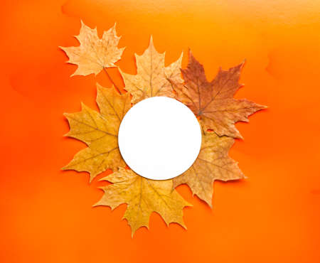 dry autumn leaves on bright orange background with round paper card for text Stock fotó