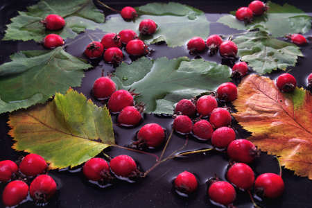 autumn leaves and hawthorn fruits in water on a black background Stock fotó