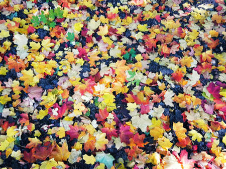 bright autumn maple leaves on the ground Stock fotó