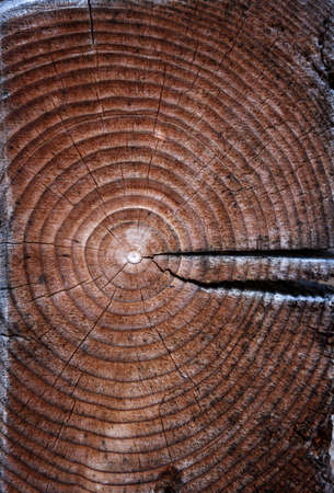 old cracked log with annual rings as background