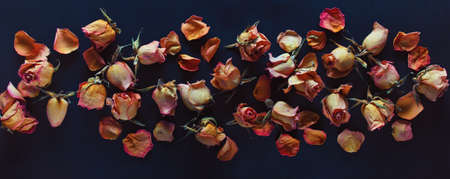 Dry withered roses on a black