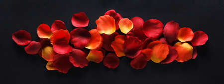 Bright decorative rose petals on a black 免版税图像 - 147023266