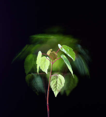 stylish poster with young bush with leaves on a black background, fantasy motion effect long exposure