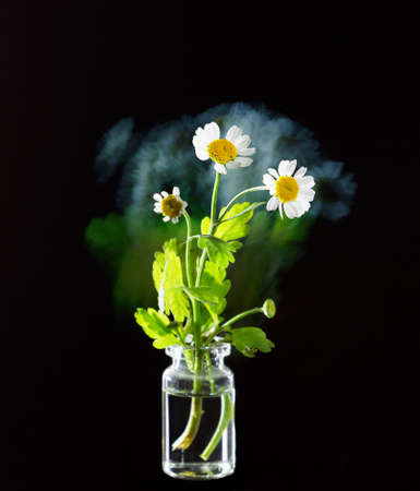 stylish poster with flower chamomile, matricaria on a black background, fantasy motion effect long exposure