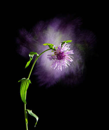 stylish poster with flower cornflower meadow on a black background, fantasy motion effect long exposure 免版税图像