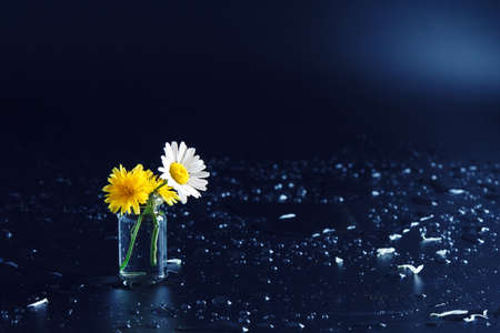 two small daisy chamomile flowers in a glass bottle on black background with a place for text