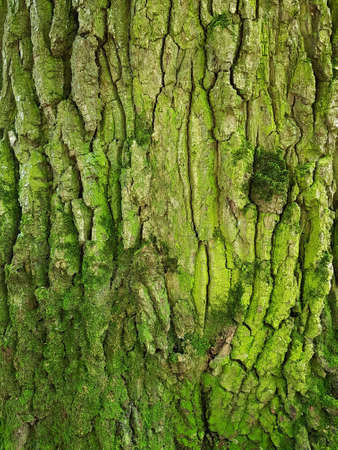 tree trunk bark texture with green moss 免版税图像