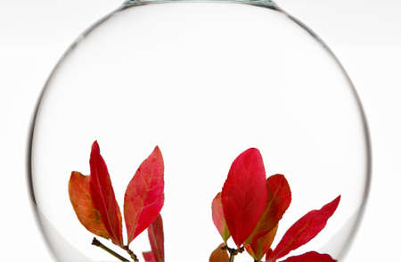minimalistic poster with bright red autumn leaves in a glass sphere 免版税图像