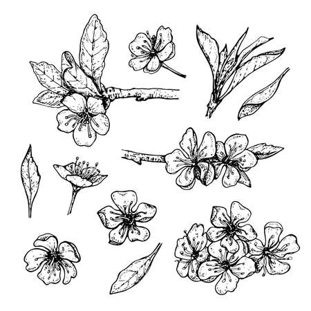 set of hand drawn blossoming cherry branches with flowers and leaves on wite