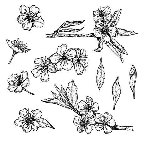 collection of hand drawn blossoming cherry branches with flowers and leaves isolated on wite