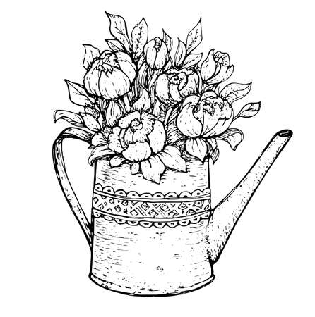 Hand drawn vintage bouquet of spring peony flowers in garden watering can