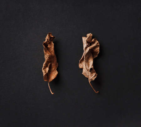 poster with dry leaves on black background, aging and withering concept Stock fotó