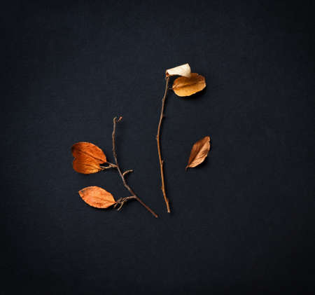 poster with dry twig with leaves on black background, aging and withering concept Stock fotó