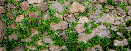 cobblestone street: a traditional wall with stone and green grass between rocks