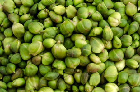 alcaparras: alcaparras frescas antes de tratar