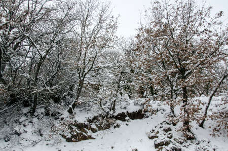 snow covered: trees snow covered on mountain with cloudy sky. white and nature