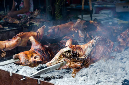 piglets: Typical Sardinian food. Piglets roast cooking in the bbq in a typical sardinian community festival. Aritzo Autunno in Barbagia