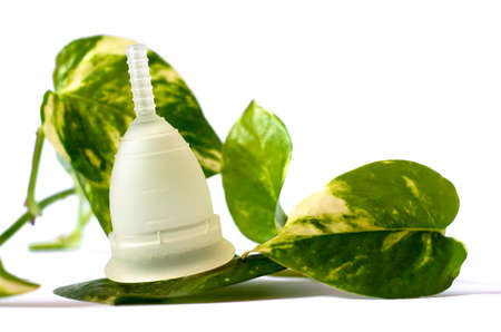 green and white: White menstrual cup with green leaves isolated in white background. Photo Image