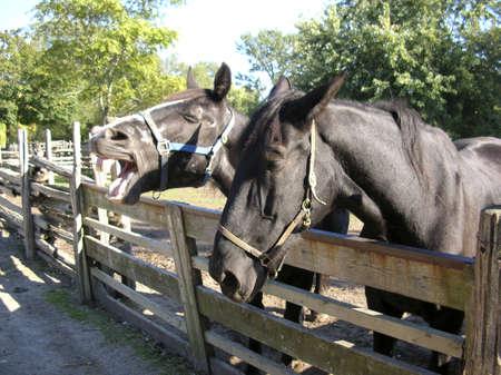 2 horses Stock Photo - 1920590