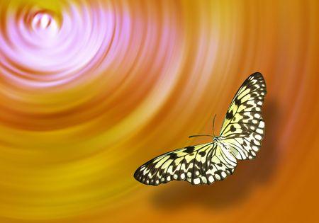 Careless butterfly