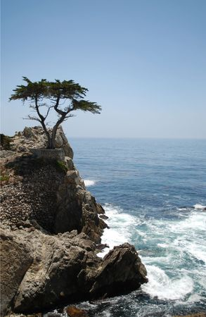 Tree on cliff, Pacific Ocean coast Stock Photo