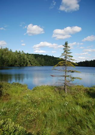 Lonely fir-tree on a lake, Algonquin Provincial Park, Ontario, Canada Stock Photo