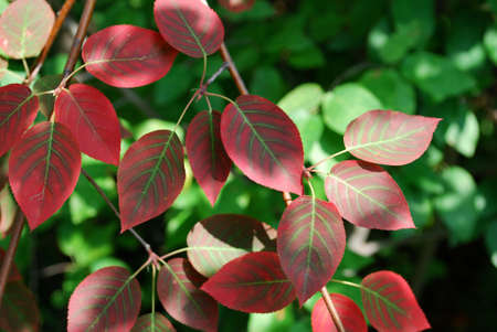 Photo of colorful leaves in a garden, Ontario, Canada