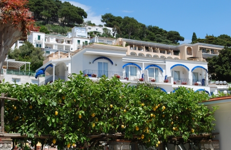 Lemon trees in a garden, Island Capri, south of Italy Stock Photo