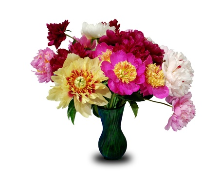 Peony bouquet, isolated image