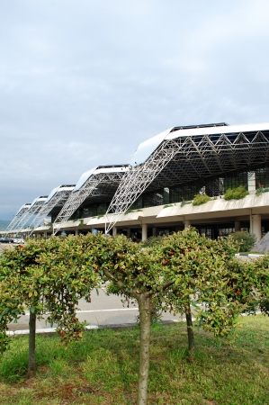 Tree at Sochi Airport