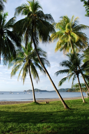 Coconut palms on a beach, Costa Rica